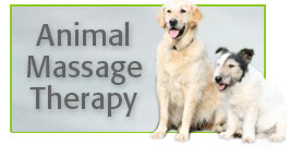 Alana Stevenson Animal Massage Therapy