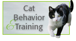 Cat Behaviour Training
