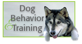 Dog Behavior & Training, Alana Stevenson