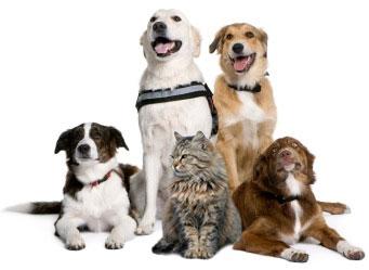adopt cat_dogs