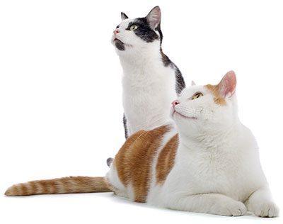 Alana Stevenson Shelter cats