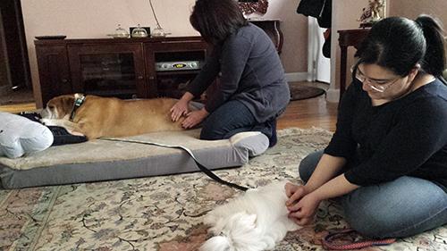 Azadeh Massage Testimonial
