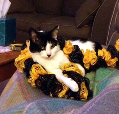 McCardle Cat Testimonial