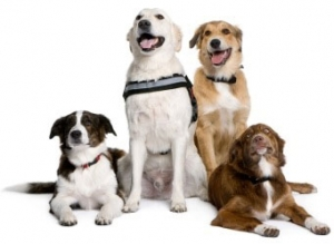 Alana Stevenson Dog Training & Socialization