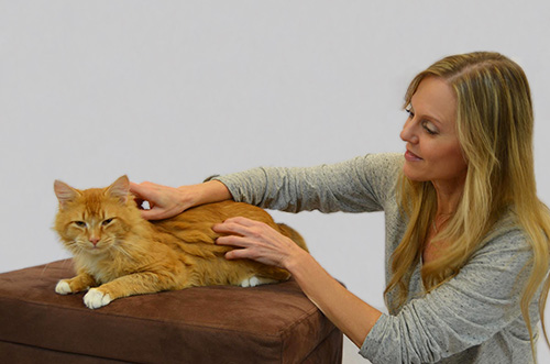 Alana Stevenson Animal Massage