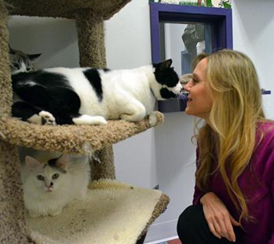Humane Feline Handling Seminar