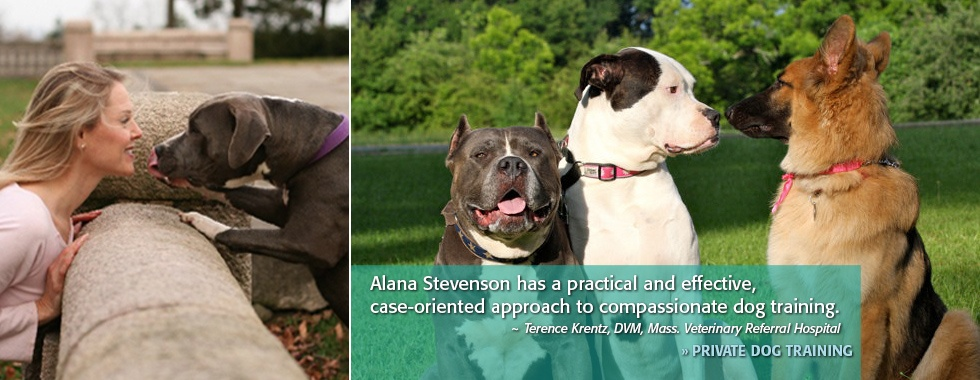 Private Dog Training - Alana Stevenson