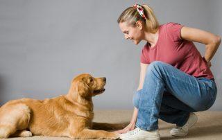 Alana Stevenson Dog Training