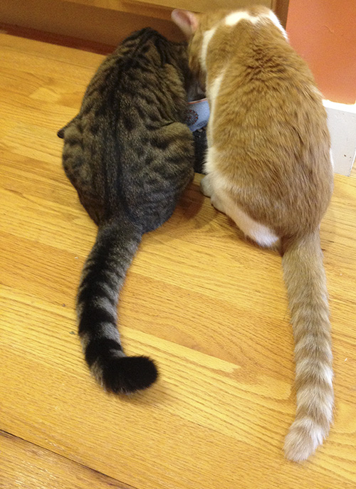 Cats are bonded pairs