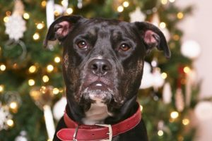 Holiday Training Tips for Happy Dogs