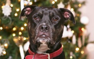 pet training tips for holidays