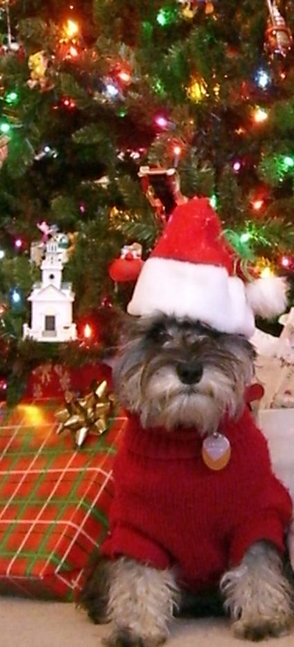 Happy Dog Holiday