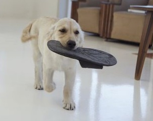 puppy carrying slipper