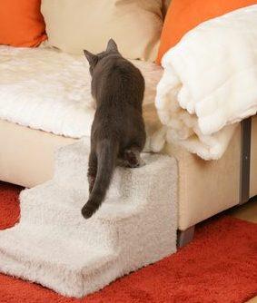 cats arthritis stairs