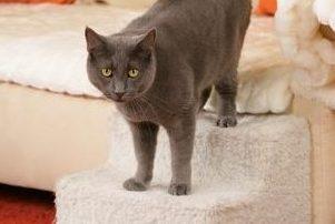 cats arthritis