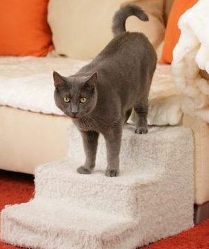 arthritis cats