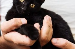 holding kitten instead of scruffing cats