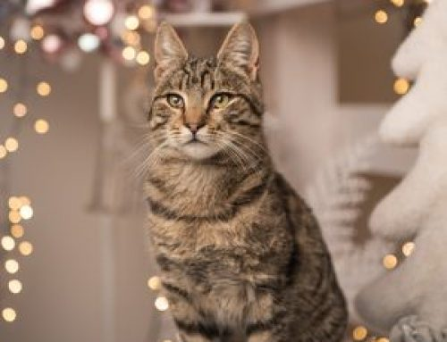 Make Your Cat Happier with these New Year's Resolutions in 2019