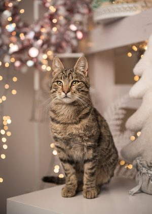 Make your cat happier at Christmas