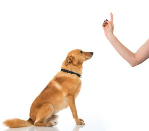 instruct your dog to sit