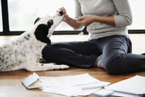 treats dog training