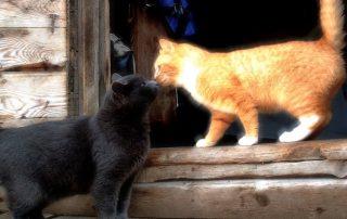Cats - Humane Society of Greene County